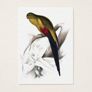 Black-Tailed Parrakeet by Edward Lear Business Card