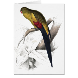 Black-Tailed Parrakeet by Edward Lear Card