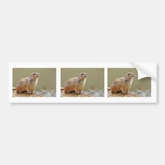 Black-tailed Prairie Dog Bumper Sticker