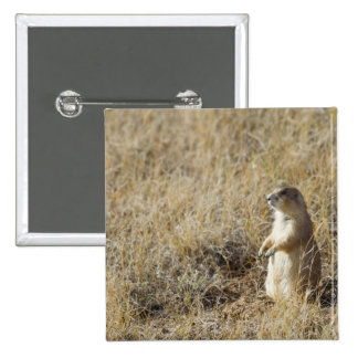 Black-tailed Prairie Dog Button