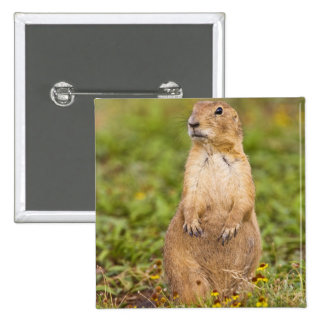 Black-tailed Prairie Dog Cynomys Pinback Button