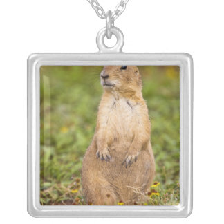 Black-tailed Prairie Dog Cynomys Silver Plated Necklace