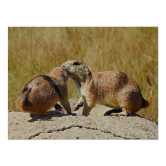 """Black-tailed Prairie Dog Framed Print"