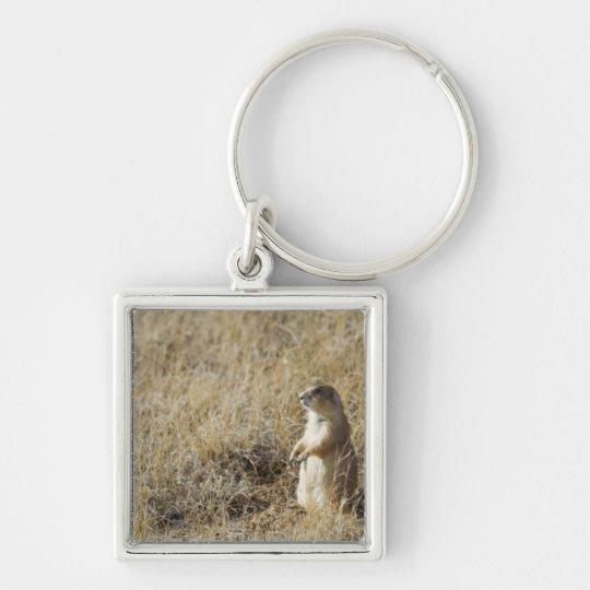 Black-tailed Prairie Dog Keychain