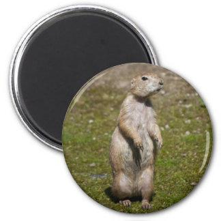 Black-tailed Prairie Dog Magnets
