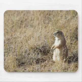 Black-tailed Prairie Dog Mouse Pad