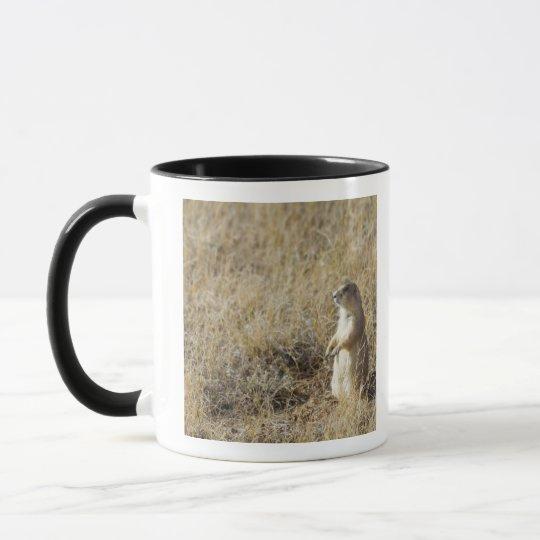 Black-tailed Prairie Dog Mug
