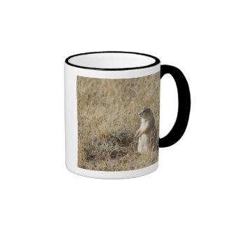 Black-tailed Prairie Dog Ringer Coffee Mug
