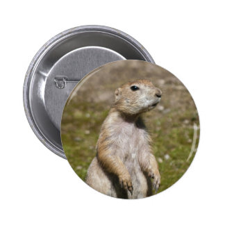 Black-tailed Prairie Dog Pinback Button