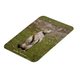 Black-tailed Prairie Dog Rectangular Magnets