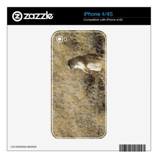 Black-tailed Prairie Dog Skin For iPhone 4S