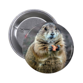 Black-tailed prairie dog, Sonoran Desert Museum, A Pinback Button