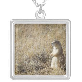 Black-tailed Prairie Dog Square Pendant Necklace
