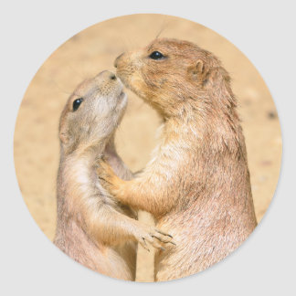 Black-tailed Prairie Dogs Classic Round Sticker