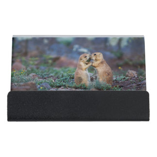 Black-Tailed Prairie Dogs - (Cynomys ludovicianus) Desk Business Card Holder