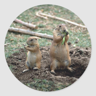 Black-tailed prairie dogs, Sonoran Desert Museum, Stickers