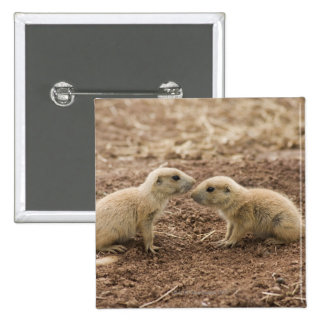 Black Tailed Prarie Marmot Pinback Buttons
