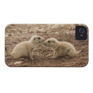 Black Tailed Prarie Marmot Case-Mate iPhone 4 Case