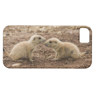 Black Tailed Prarie Marmot iPhone SE/5/5s Case