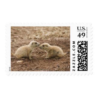 Black Tailed Prarie Marmot Postage