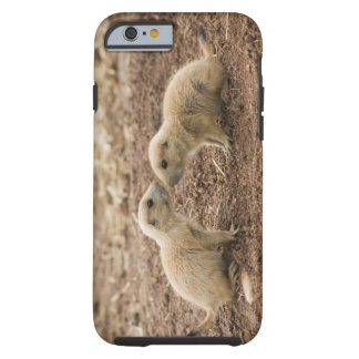 Black Tailed Prarie Marmot Tough iPhone 6 Case