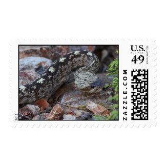Black-tailed Rattlesnake Postage