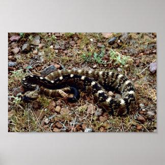 Black-tailed rattlesnake poster