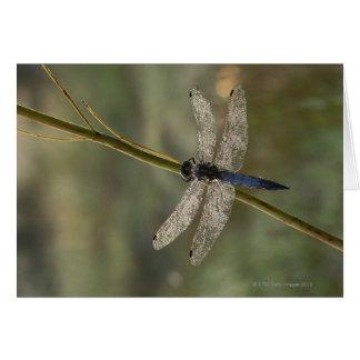 Black-tailed Skimmer Card