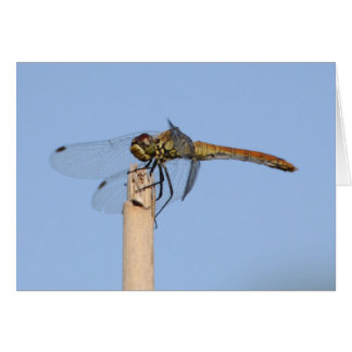 Black tailed Skimmer Dragonfly Greetincard Card