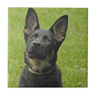 Black & Tan GSD Pup Small Square Tile