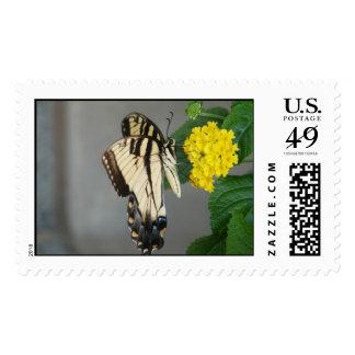 Black & Tan Monarch Butterfly Postage