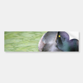Black Teal Bumper Sticker