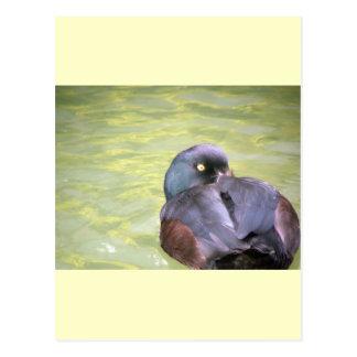 Black Teal Postcard