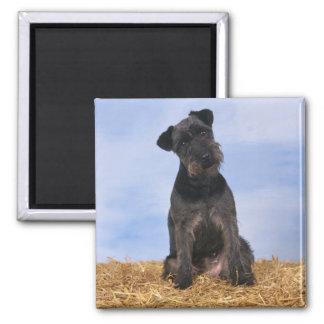 Black Terrier Magnet