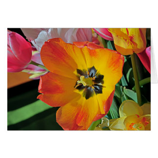 Black Throat Tulip Greeting Cards