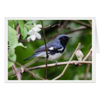 Black-throated Blue Warbler Card