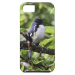 Black-throated Blue Warbler iPhone 5 Case