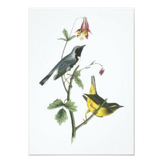 Black-throated Blue Warbler, John Audubon Card