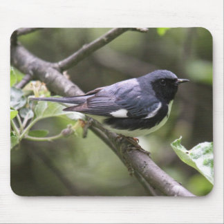 Black-throated Blue Warbler Mouse Pad