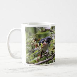 Black-throated Blue Warbler Mug