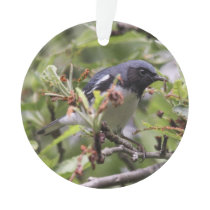 Black-throated Blue Warbler Ornament