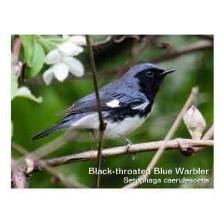 Black-throated Blue Warbler Postcard