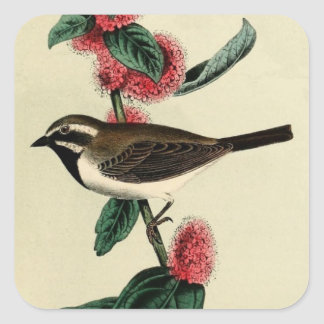 Black Throated Finch Square Sticker