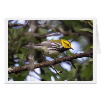 Black-throated Green Warbler Card