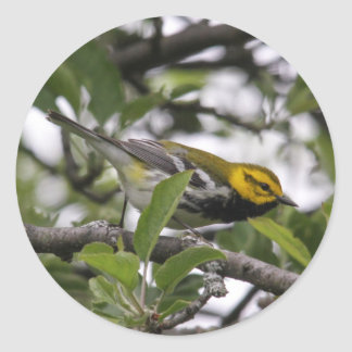 Black-throated Green Warbler Classic Round Sticker