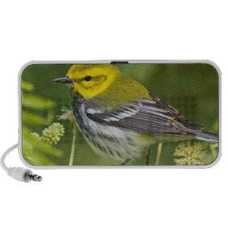 Black-throated Green Warbler Dendroica Speaker System