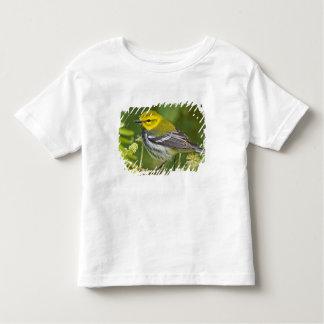 Black-throated Green Warbler Dendroica T Shirt