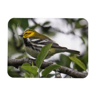 Black-throated Green Warbler Rectangular Magnet