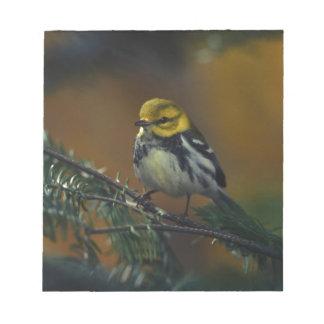 Black throated warbler notepad