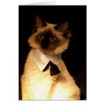 Black Tie Kitten Cards
